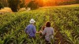 A saúde e o uso de agrotóxicos na agricultura