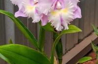 Orquídeas: quais são as espécies mais raras do mundo?