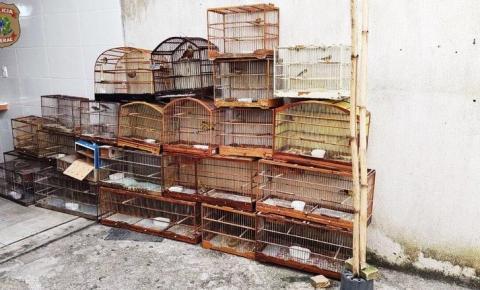PF combate comércio ilegal de pássaros silvestres em Minas Gerais