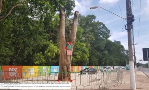 Corpo de Bombeiros recomenda retirada da preguiça de madeira da entrada do Bioparque da Amazônia de Macapá/Ap.