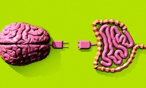 O trato digestivo é responsável por cerca de 90% da produção de serotonina no corpo humano
