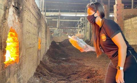 Mais de 60 quilos de drogas são destruídos pela PF no Amapá