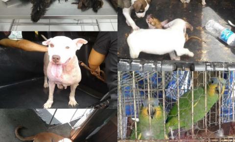 Polícia resgata 17 animais que sofriam maus- tratos em Macapá.